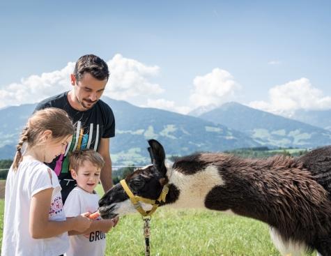 Familiennest bei den Alpakas (Kindertag)